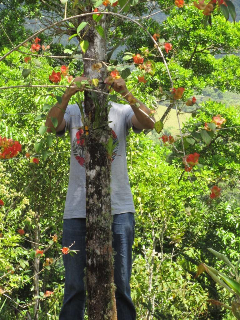 L'homme-orchidées à l'oeuvre
